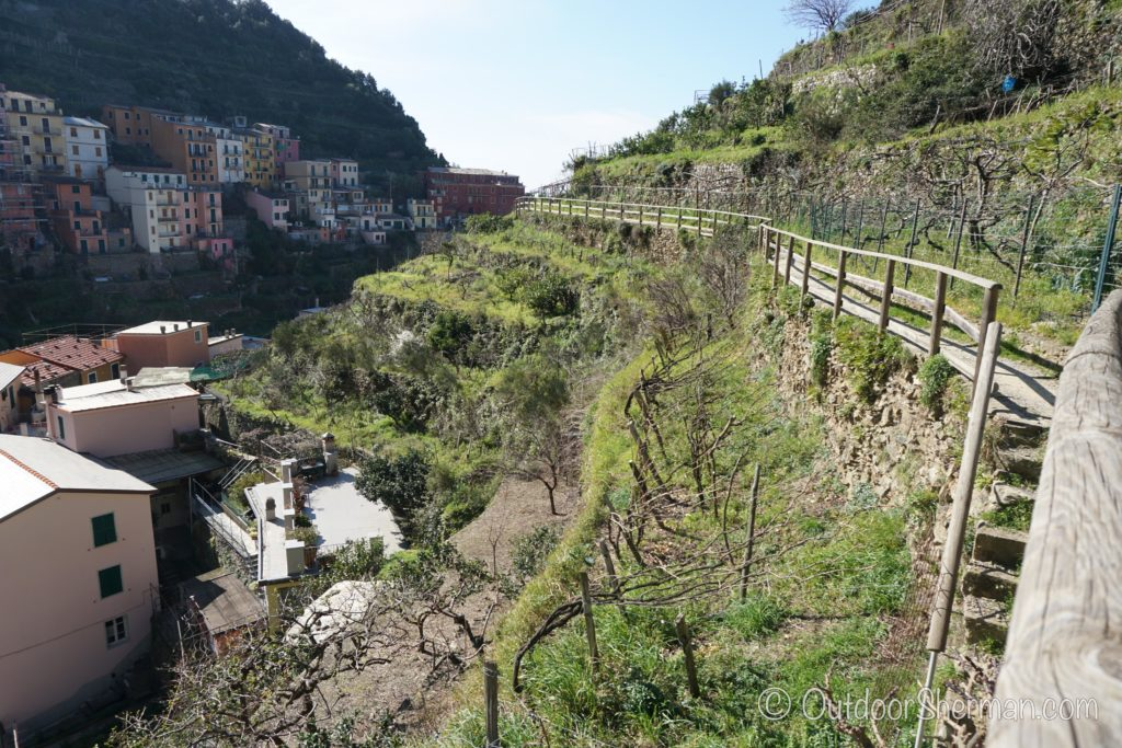 Vineyards in Manarola